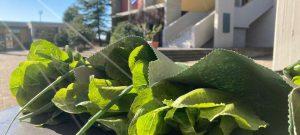 Κάτι τρέχει στον λαχανόκηπο του ΑΞΙΟΝ